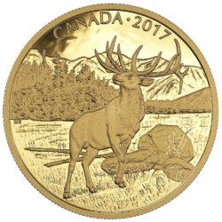 Majestic Elk 2017 — Goldmünze aus Kanada mit nur 400 Stück Auflage